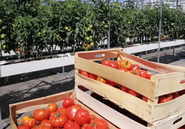 caisses de tomates